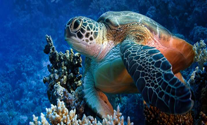 rich nations pledge to double funds for biodiversity