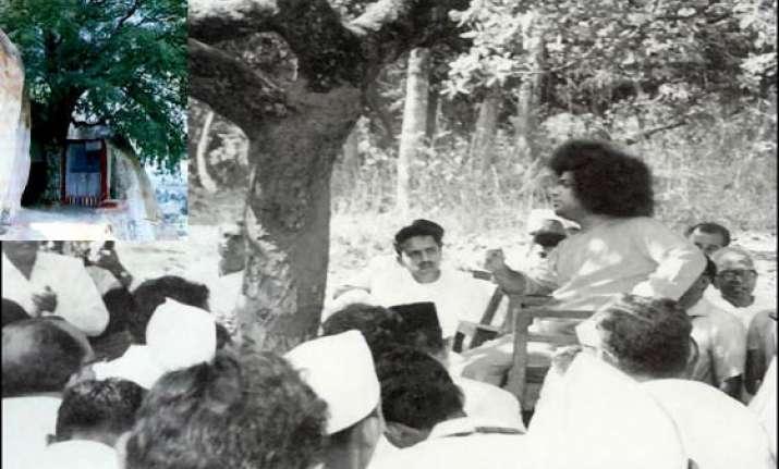 sathya sai baba s kalpavriksha tree collapses