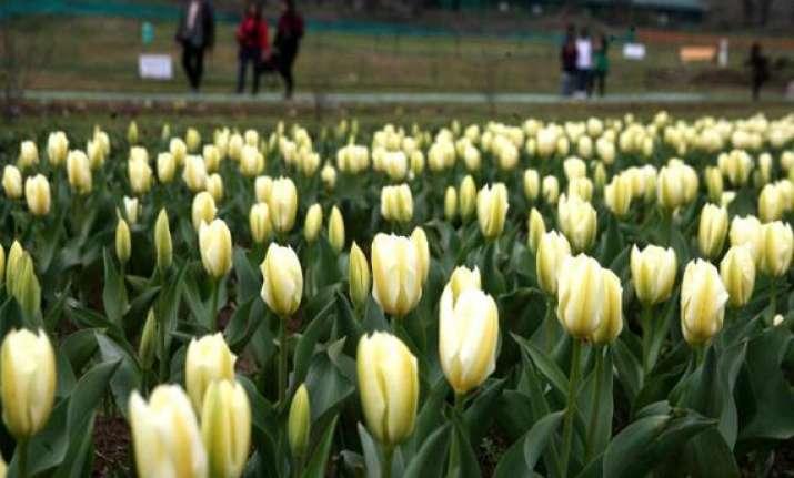 srinagar s tulip garden thrown open to visitors