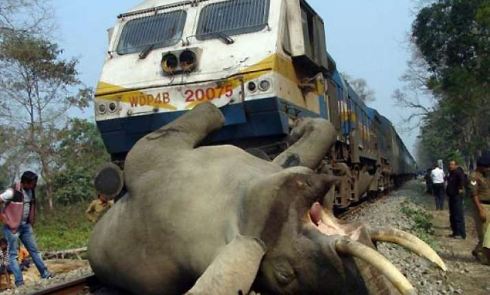 three elephants run over by train in wb