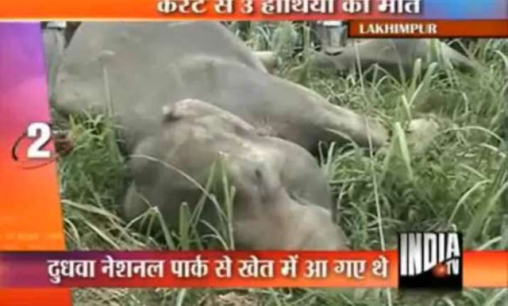 three elephants electrocuted in up