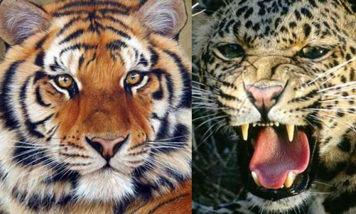 tigers leopards can be killed if they threaten humans