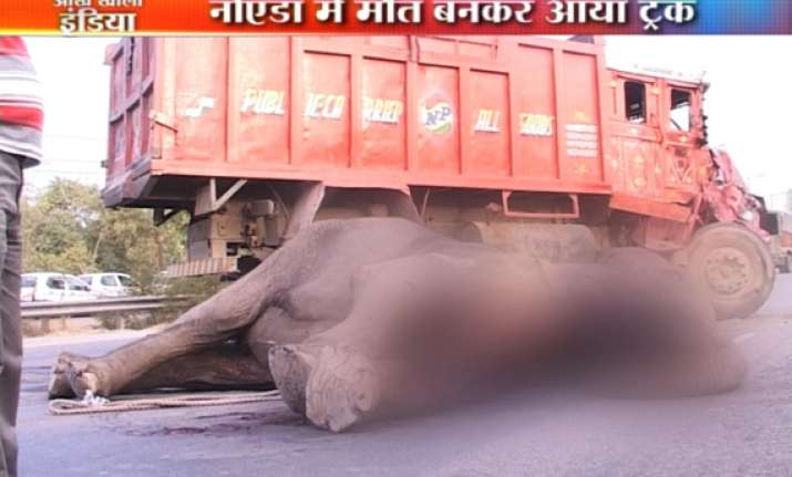 truck crushes elephant to death in noida