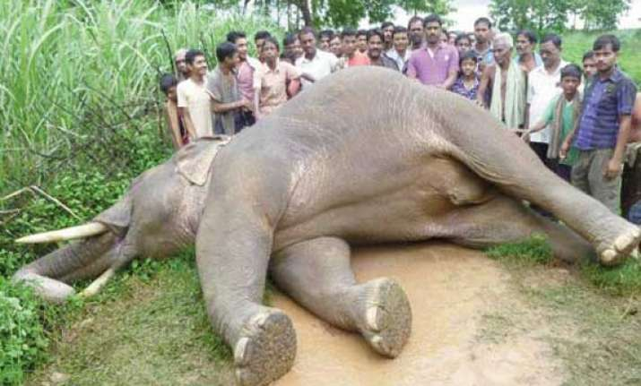 tusker dies in odisha