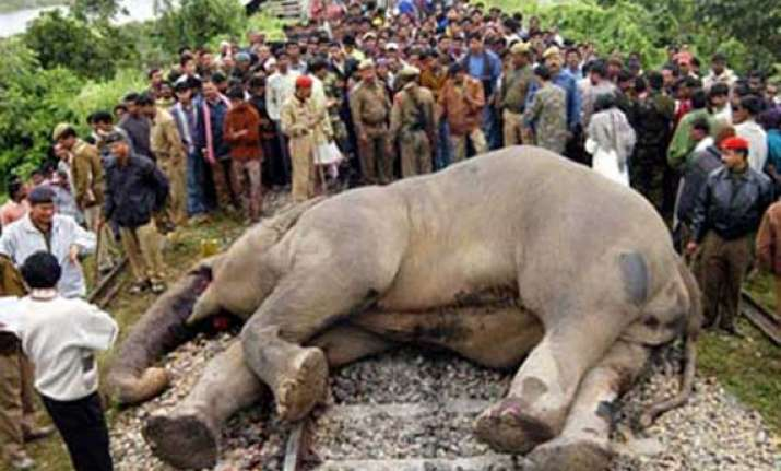 two elephants crushed to death in jalpaiguri