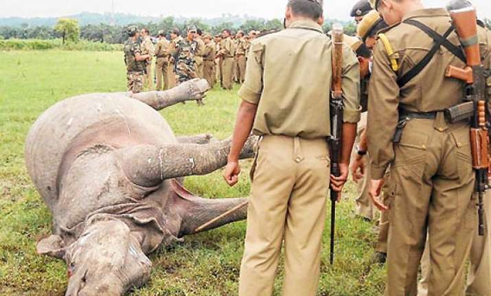 two rhinos killed in kaziranga horn of one removed