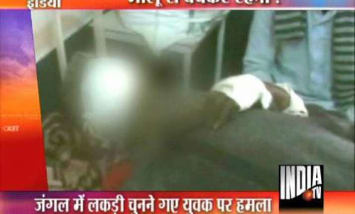 two pilibhit villagers mauled by bear