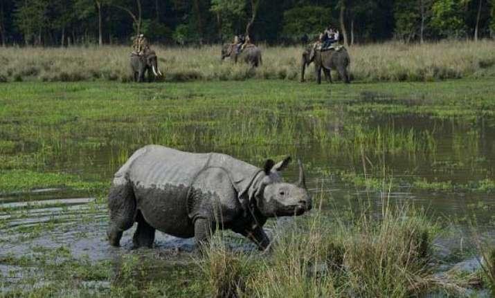 two rhino carcasses found in kaziranga