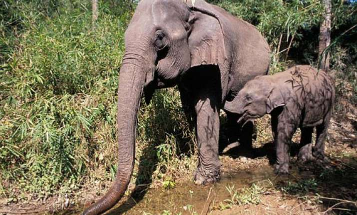 villagers to relocate to make way for jumbos