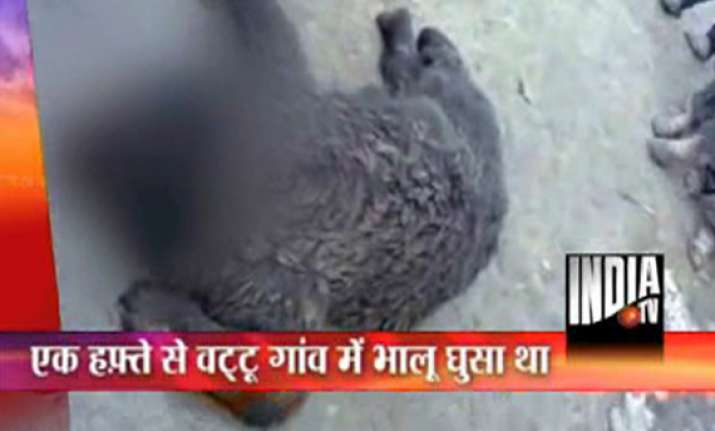 villagers in kashmir stone a bear to death