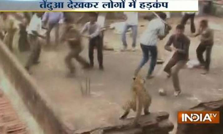 watch live video of leopard creating panic in a village in