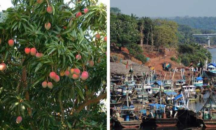 who will buy our alphonso mangoes ask jaitapur farmers
