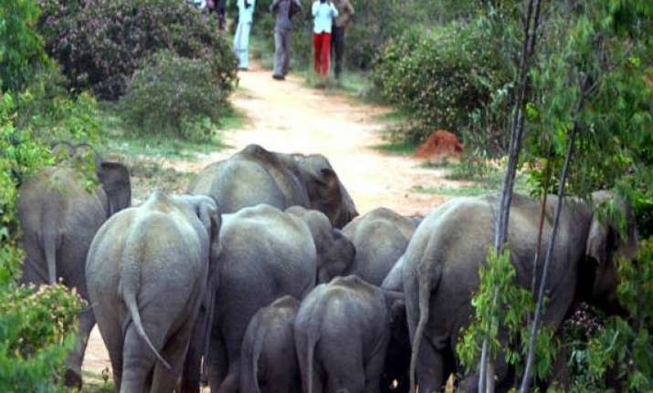wild elephants outside bangalore pushed back into tamil