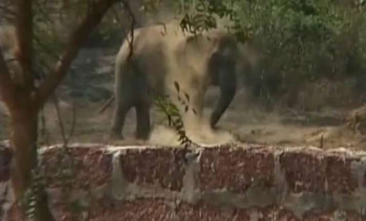 wild elephant gives birth to calf inside factory stockyard