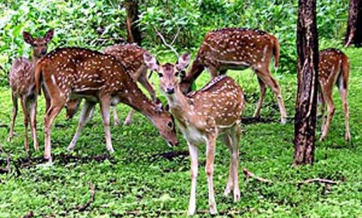 22 deer found dead in chhattisgarh zoo