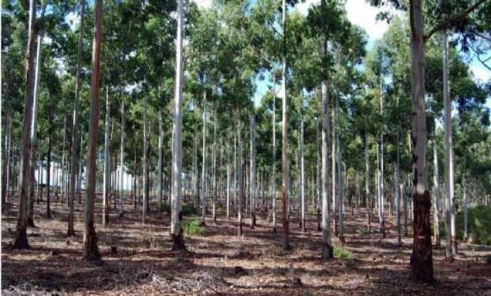 42 woodcutters from tn held for cutting red sandalwood in ap