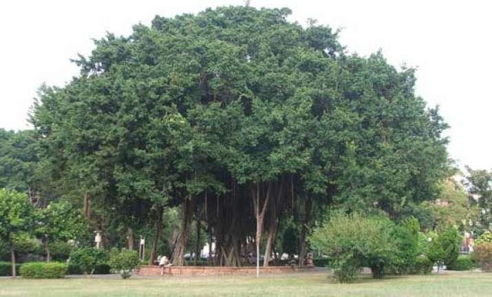 500 year old banyan tree gets tourist spot status in odisha