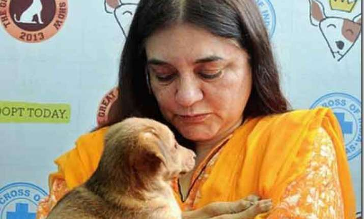 at a glance maneka gandhi from a charming model to union