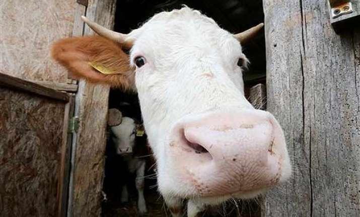 cow urine can cure cancer bjp member in rajya sabha