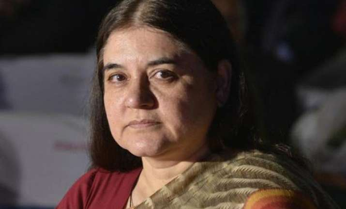 maneka gandhi suggests cow urine to clean office floors
