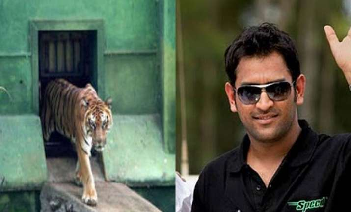 dhoni adopts mysore zoo tiger