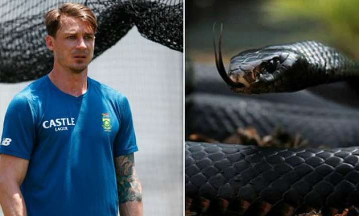 dale steyn s close call with deadly black mamba
