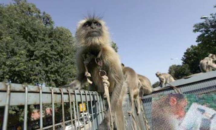 stray monkey enters games village despite heavy security