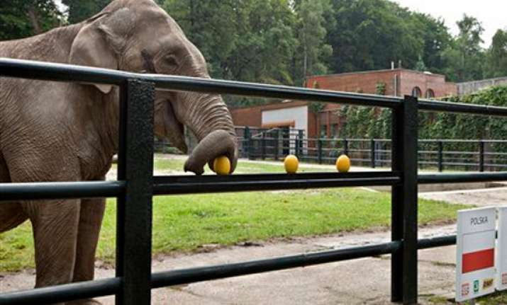 elephant says poland to win euro 2012 first game