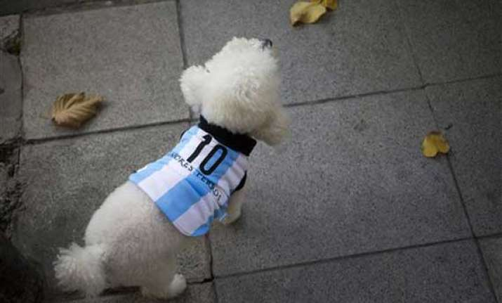 fifa world cup in argentina even dogs get snazzy for world