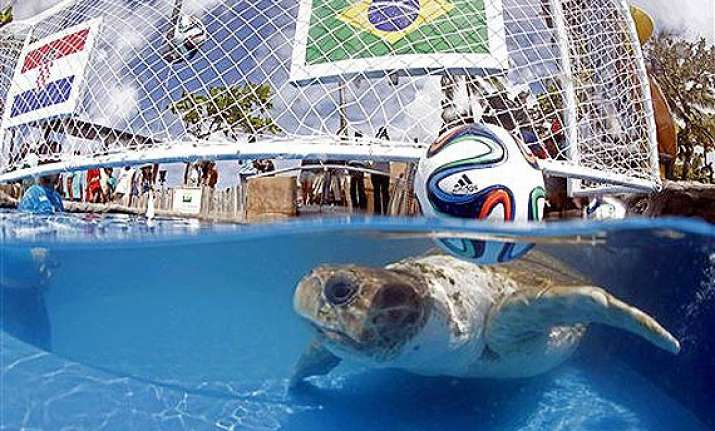 fifa world cup brazil s animal oracle predicts home win