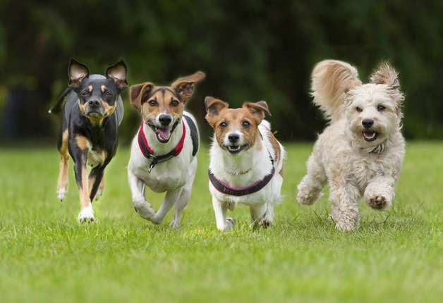 6 Dog Breeds That are Not the Best Choice for First-time ... |The Best Pet Dogs