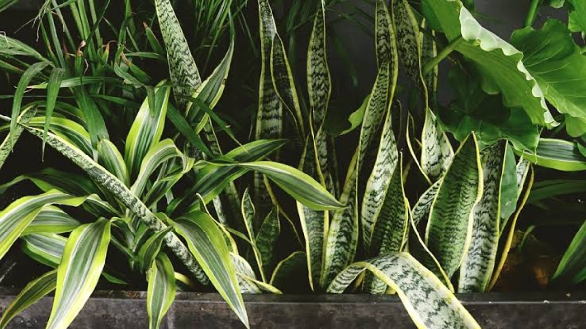 The Top Plants for Destroying Air Pollutants in your Home