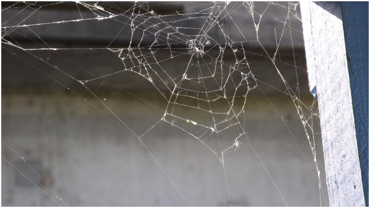 Vastu Tips: Know why spider's web is considered inauspicious and should be  cleaned immediately | Astrology News – India TV