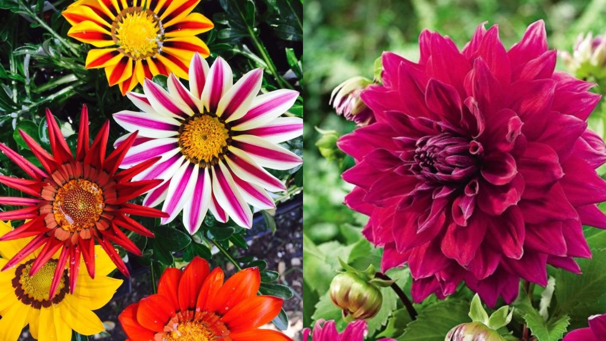 7 Easy To Grow Winter Flowering Plants To Bring Colour And