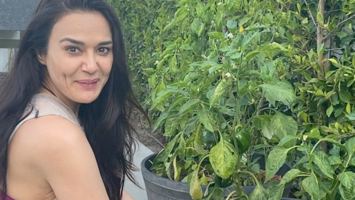 Preity Zinta enjoys organic farming, plucks homegrown capsicum |  Celebrities News – India TV