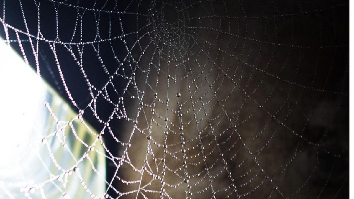 Vastu Tips: Remove spider webs from the house to avoid discord in the  family | Vastu News – India TV