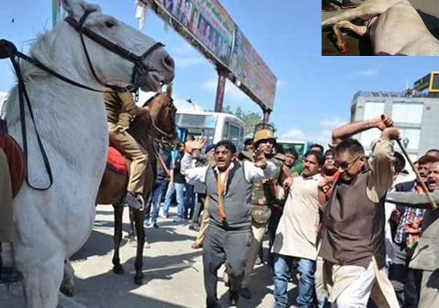 BJP MLA breaks horse's leg