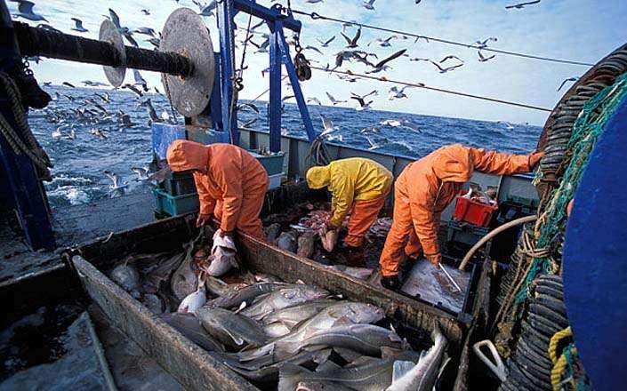 Fishermen in the sea