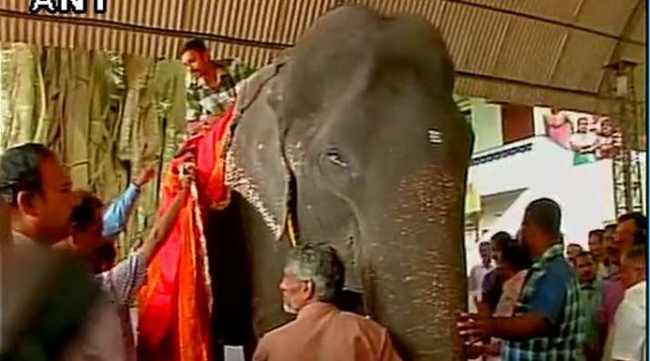 This 86-year-old Kerala elephant is all set to enter