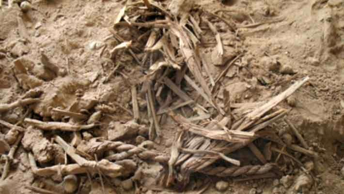 Researchers Sequence Genome of Ancient Barley