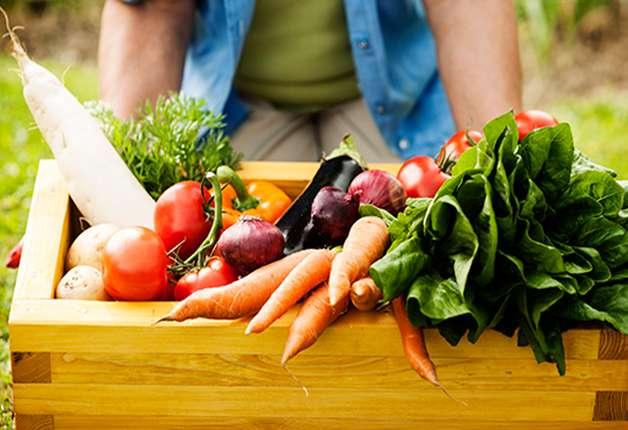 India Tv - Season vegetables