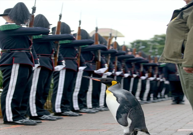 India Tv - Already a knight, the famous penguin has now been given the new title