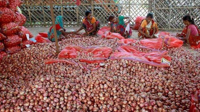 Onions in Madhya Pradesh