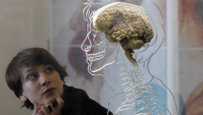 Too much of brain activity can damage your memory