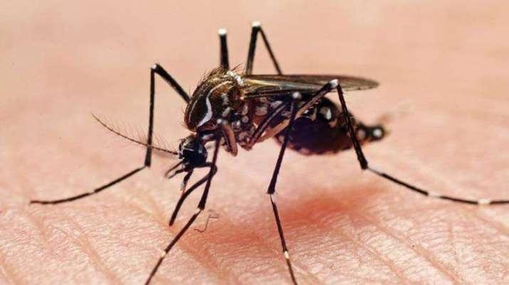 dengue, chikungunya cases- India TV
