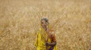 GM crop- India TV