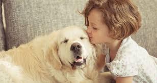 Pet dog needs more affection then food