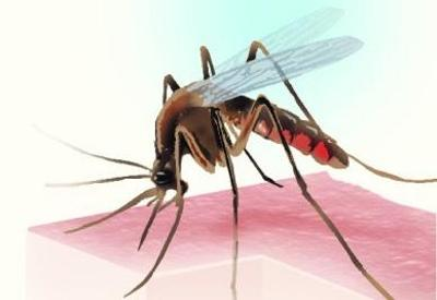 The doctors are suffering from dengue and Chikungunya-