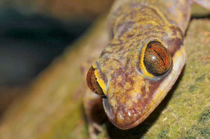 Researchers name newly discovered lizard species after THIS