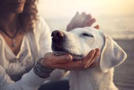 Dogs understand words and intonation of human language-